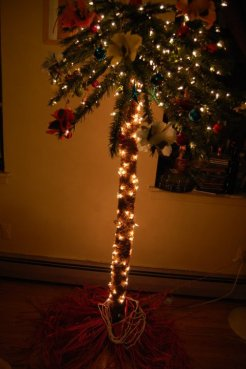 My Chirstmas Palm Tree 4